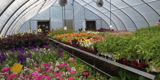 Cornell Cooperative Extension   Commercial Horticulture