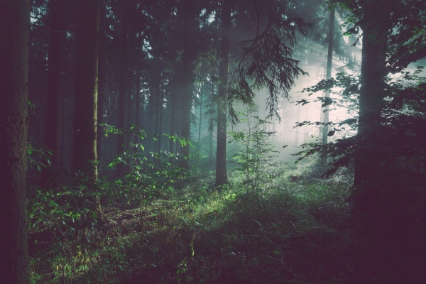 Forest bathing and Ayurveda.