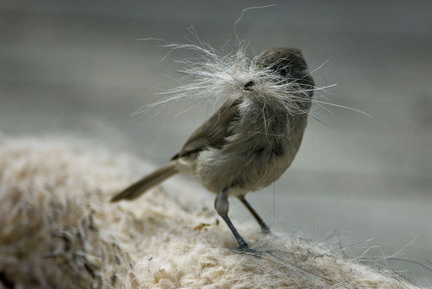 Image result for images of human hair  bird nests