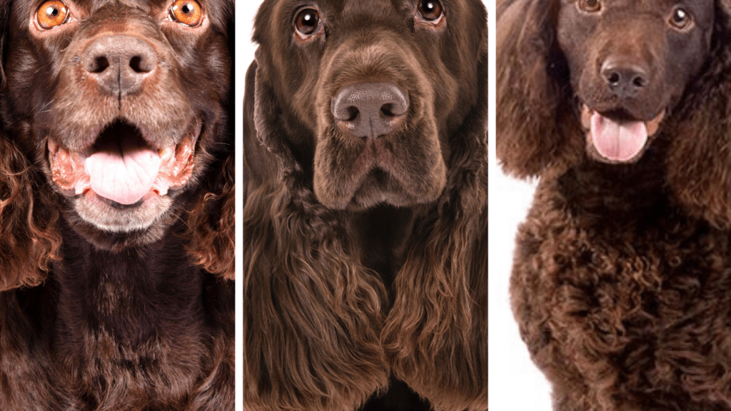 Quiz Which Dog Breed Is Which Test Your Knowledge