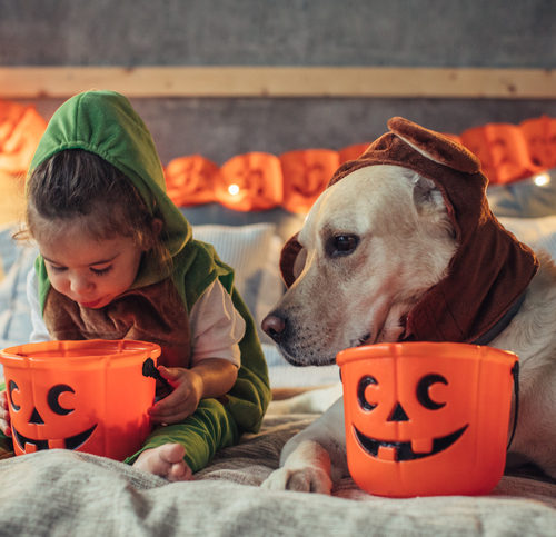 We may earn commission on some of the items you choose t. Matching Halloween Costumes For Kids And Dogs 2020