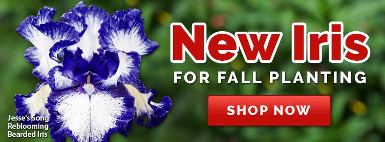 Welcome To Brecks Canada Shop Brecks Premium Bulbs Induced Info