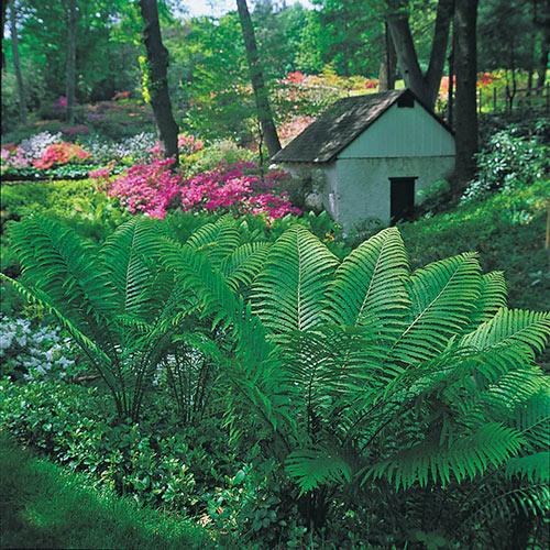 Till Leaves Garden