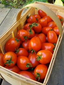 basket-of-tomatoes