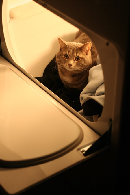 cat-in-dryer