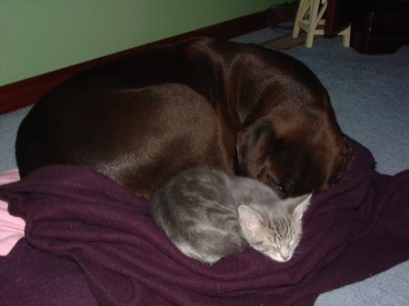 dog-and-cat-sleeping