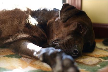 lucy-sleeping
