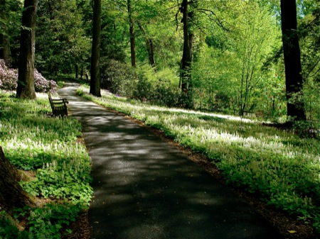 shaded-path-through-trees