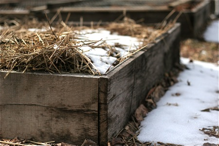 raised-bed-with-snow