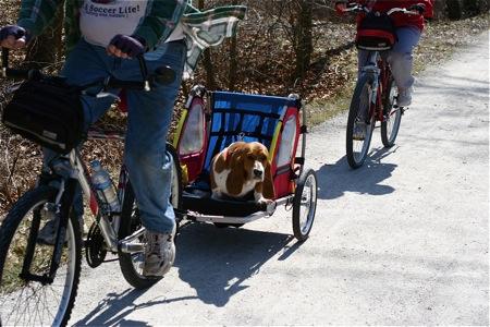 dog-in-bike-wagon