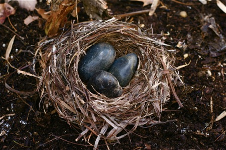 bird-nest-with-smooth-stones