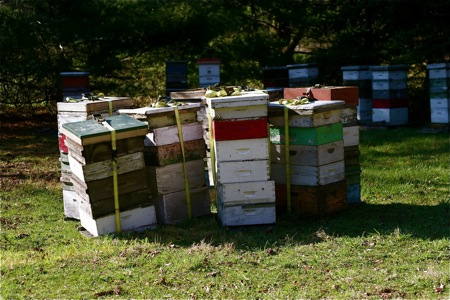 bee-hives1