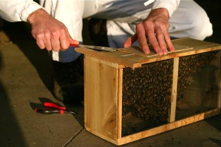 installing-bee-package-4