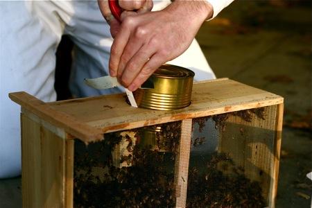 installing-bee-package-5