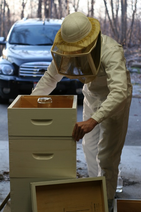 installing-bees-15