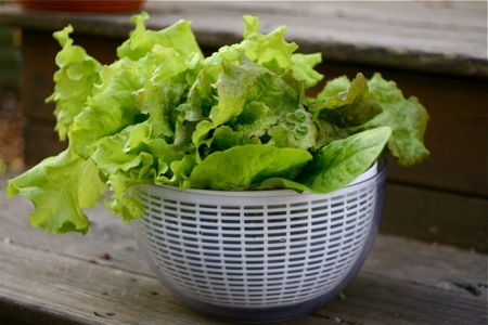 basket-of-lettuce