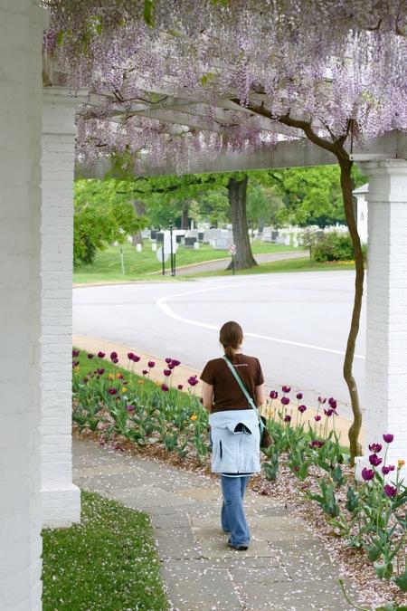 walking-under-the-wisteria-arbor