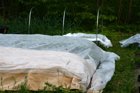 raised-beds-covered-with-frost-blankets