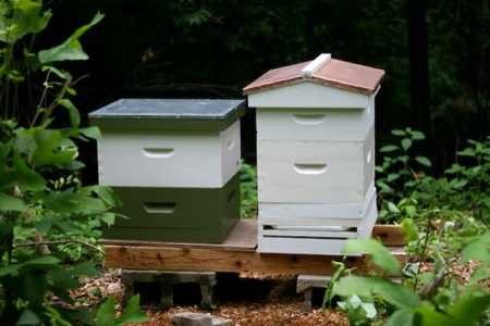 two_beehives