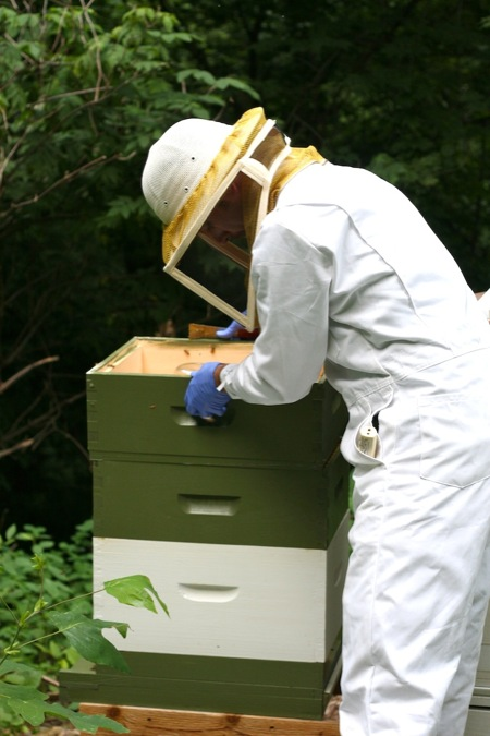 Checking_on_the_Beehive