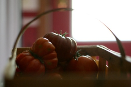 tomatoes_in_the_dark