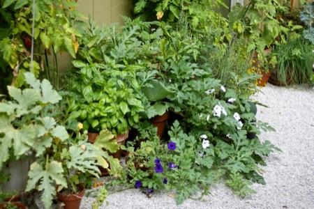 plants_in_pots