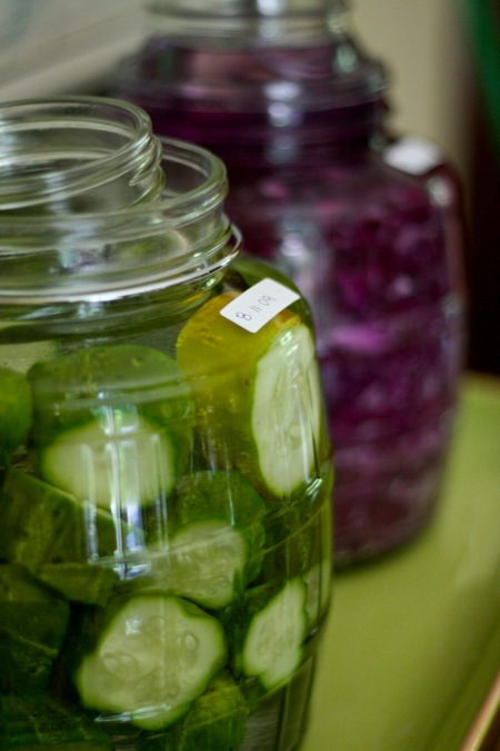 fermenting_pickles