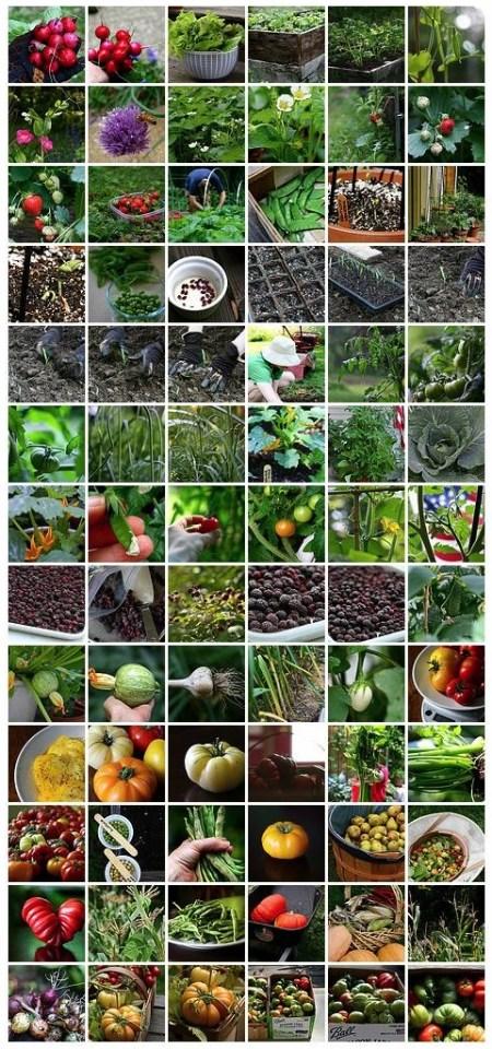 2009 Edible Garden
