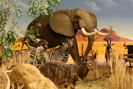 African_animal_scene_at_Cabellas