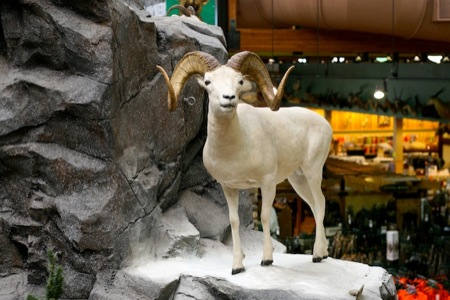 Stuffed_mountain_ram