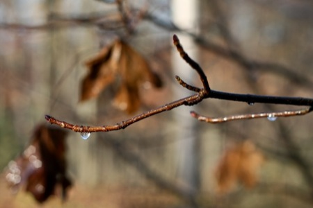 frozen_raindrop_on_branch