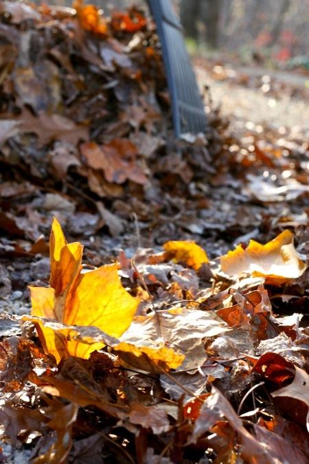 Leaves_to_rake