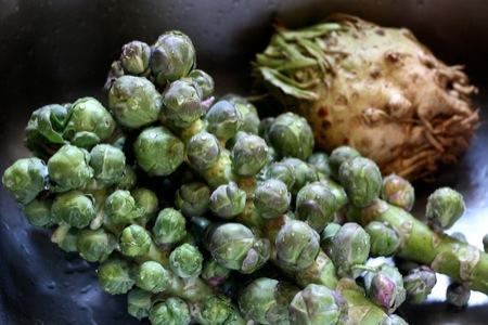 brussels_sprouts_on_stalk