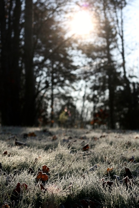 morning_frost