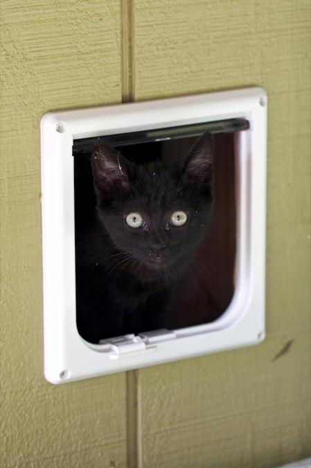 pet door for the outdoor cats chiot s run