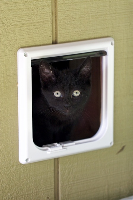 This Looks Like Itu0027s Going To Be A Wonderful Solution For Our Garage Cats!  I Always Thought Pet Doors Were Interesting, But This Is The First One  Weu0027ve Ever ...