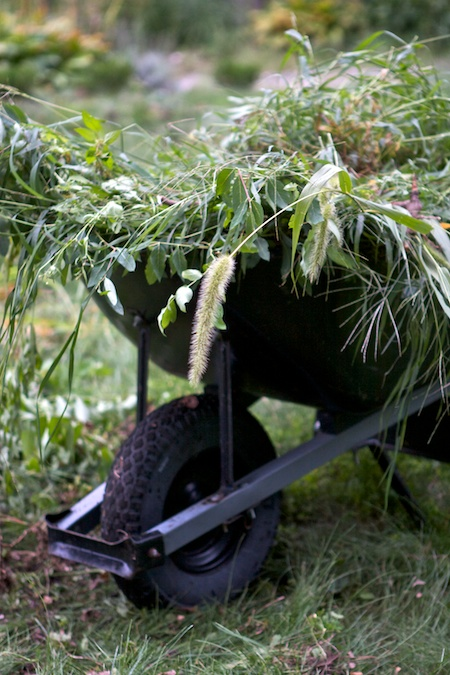 wheelbarrow_load_of_weeds