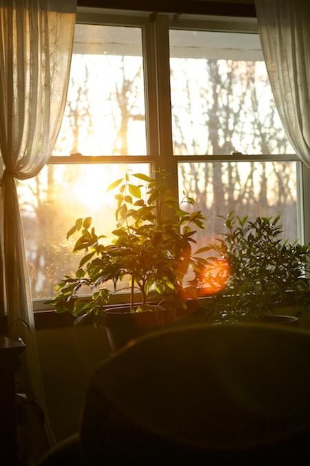 sunlight in living room 1