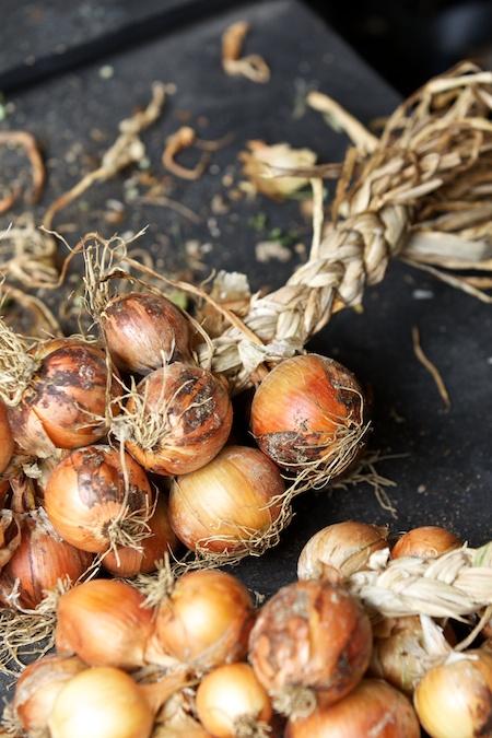 preparing the onion harvest 4