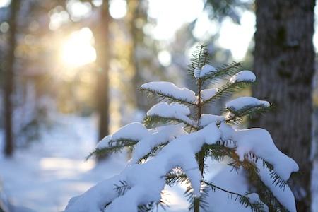 Sun and snow 1