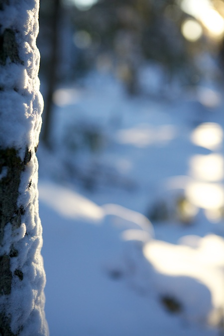 Sun and snow 2