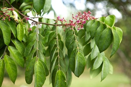 Tropical Fruit 3