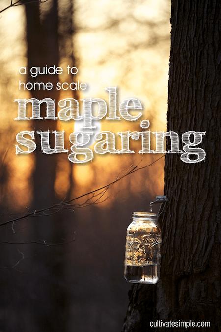 maple sugaring title slide