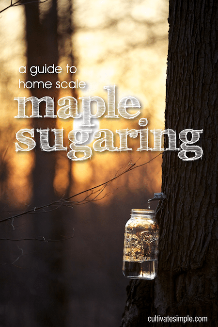 maple sugaring title slide