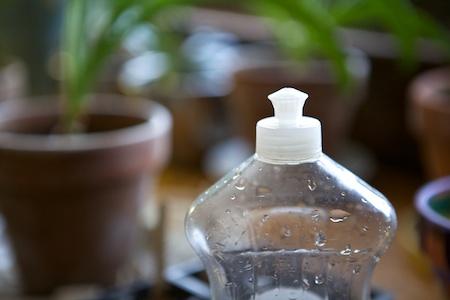 watering seedlings 2