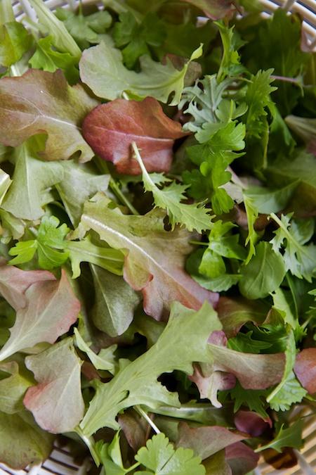 lettuce harvest 1 (1)