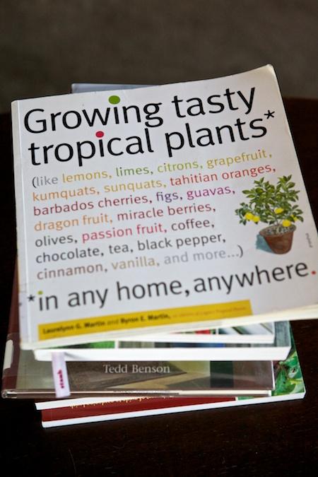 tasty tropicals 1