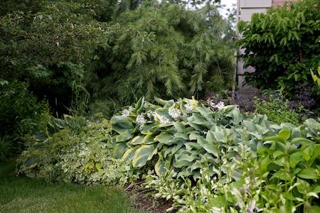 Gingers Garden 12