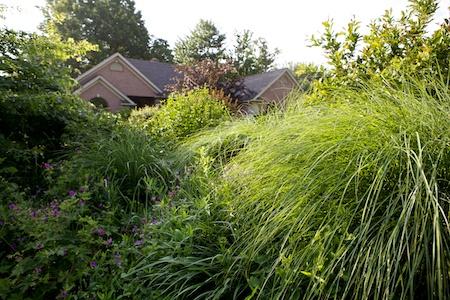 Gingers Garden 2
