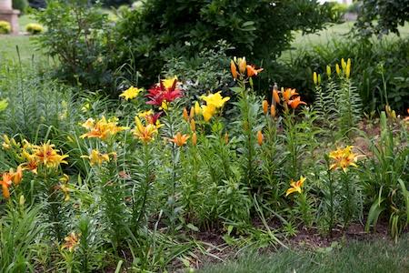 Gingers Garden 7